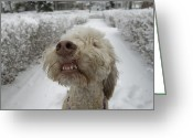 Property Released Photography Greeting Cards - A Dog Stands Outside On A Snowy Day Greeting Card by Joel Sartore