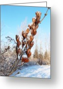 Leaves Photographs Greeting Cards - A Dose Of Winter Greeting Card by Christy Patino