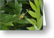 Ellicott Greeting Cards - A Dragonfly Resting On A Leaf Greeting Card by George Grall