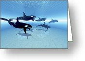 Sea Life Digital Art Greeting Cards - A Family Of Killer Whales Search Greeting Card by Corey Ford
