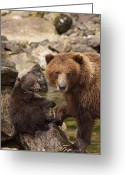 Grizzly Bears Greeting Cards - A Family Portrait Greeting Card by Tim Grams