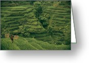 Peoples Greeting Cards - A Farmer Walks Past Terraced Rice Greeting Card by Donna K. & Gilbert M. Grosvenor