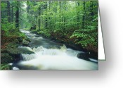 Time Exposures Greeting Cards - A fast moving stream Greeting Card by Norbert Rosing