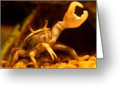 Fiddler Crab Greeting Cards - A Fiddlers Hail to a Friend Greeting Card by Debra Bailey
