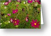European Union Greeting Cards - A Field Of Wild Flowers Growing Greeting Card by Todd Gipstein