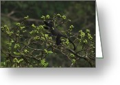 Fig Tree Greeting Cards - A Fig Tree Provides Nourishment Greeting Card by Tim Laman
