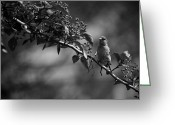 Steven Gray Greeting Cards - A Finch in Philly Greeting Card by Steven Gray