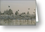 Rock Groups Greeting Cards - A Flock Of Gulls On A Beach With Sea Greeting Card by Melissa Farlow