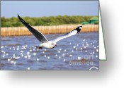Baptize Greeting Cards - A flying seagull Greeting Card by Nunnicha Supagrit