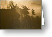 Gold Photo Greeting Cards - A Foggy Morning Greeting Card by Tim Grams