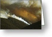 Disasters Greeting Cards - A Forest Fire Burns In Little Bear Greeting Card by Gordon Wiltsie