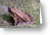 Brown Frog Greeting Cards - A Friendly Frog Greeting Card by Chalet Roome-Rigdon