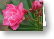 Beautiful Flowers Greeting Cards - A Garden Beauty Greeting Card by Kathy Bucari