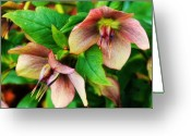 Northwest Flowers Greeting Cards - A Garden Find Greeting Card by Cathie Tyler