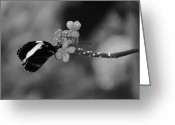 Insects Greeting Cards - A Gift Greeting Card by Aimee L Maher