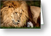 Cameron Greeting Cards - A Gift for Cameron Greeting Card by Big Cat Rescue