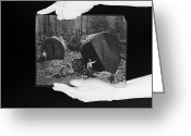 Pacific Coast States Greeting Cards - A Glass Plate Photograph Of Fallen Greeting Card by Michael Nichols