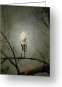 Orange Grey Greeting Cards - A Great Egret Greeting Card by Al  Mueller