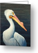 Pelican Greeting Cards - A Great White American Pelican Greeting Card by James W Johnson