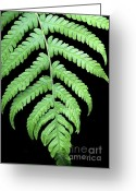 Dipped Greeting Cards - A Green Fern Greeting Card by Sabrina L Ryan