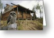 Log Cabins Photo Greeting Cards - A Hawk Owl Sits On A Stump Near A Log Greeting Card by Michael S. Quinton