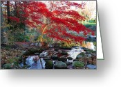 Japanese Maple Greeting Cards - A Japanese Maple With Colorful, Red Greeting Card by Darlyne A. Murawski