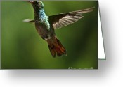 Colorful Birds Photo Greeting Cards - A Jewel Flying Greeting Card by Heiko Koehrer-Wagner