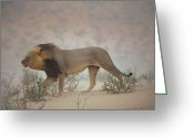 Refuges Greeting Cards - A Lion Pushes On Through A Gritty Wind Greeting Card by Chris Johns
