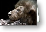 Kaiser Greeting Cards - A Lions Portrait Greeting Card by Ralf Kaiser