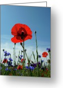 Red White And Blue Greeting Cards - A Little Red White And Blue 2 Greeting Card by Ely Arsha