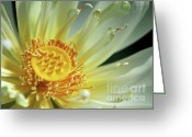 Lotus Seed Pod Greeting Cards - A Lotus Greeting Card by Sabrina L Ryan