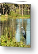 Blue Heron Photo Greeting Cards - A Lovely Day Greeting Card by Adele Moscaritolo