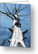 Dark Gray Dark Grey Greeting Cards - A Majestic Prescence Greeting Card by Shirley Sirois