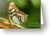 Gossamer Greeting Cards - A Malachite Butterfly Greeting Card by Sabrina L Ryan