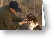 English Springer Spaniel Greeting Cards - A Male And His English Springer Spaniel Greeting Card by Joel Sartore