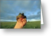 Mature Adult Greeting Cards - A Man Holds A Frog In Front Greeting Card by Joel Sartore