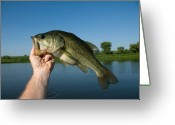 Mature Adult Greeting Cards - A Man Holds A Largemouth Bass Greeting Card by Joel Sartore