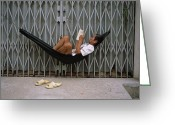 Routine Greeting Cards - A Man In A Hammock Reads A Book Greeting Card by Justin Guariglia