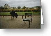 Tuileries Greeting Cards - A Man Reads In The Tuileries Gardens Greeting Card by Raul Touzon