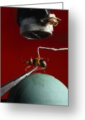 Beetles Greeting Cards - A Microphone Triggers A Flash Greeting Card by James P. Blair