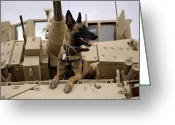 Armored Vehicles Greeting Cards - A Military Working Dog Sits On A U.s Greeting Card by Stocktrek Images