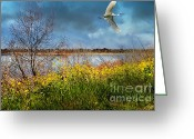 Migrating Bird Greeting Cards - A Moment In Time In The Journey of The Great White Egret . 7D12643 Greeting Card by Wingsdomain Art and Photography