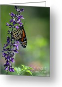 Gossamer Greeting Cards - A Moment in Time Greeting Card by Sabrina L Ryan