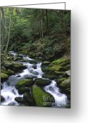 Smoky Mountains Greeting Cards - A Moment of Solitude Greeting Card by Sandra Bronstein