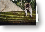 Asian Architecture And Art Greeting Cards - A Monkey Sits Contemplatively Greeting Card by Justin Guariglia