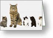 Cut Out Greeting Cards - A Mother With Four Kittens All Sitting In A Row. Greeting Card by Nicola Tree
