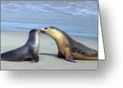 Seal Greeting Cards - A Mothers Love Greeting Card by Mike  Dawson