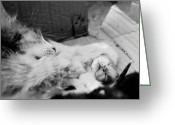 Paws Greeting Cards - A Mothers Paw Greeting Card by Dean Harte