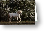 Refuges Greeting Cards - A Mustang Stallion In The Wild Horse Greeting Card by Melissa Farlow