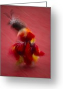 Ethnic Greeting Cards - A Native American Dancer In Traditional Greeting Card by Michael Melford